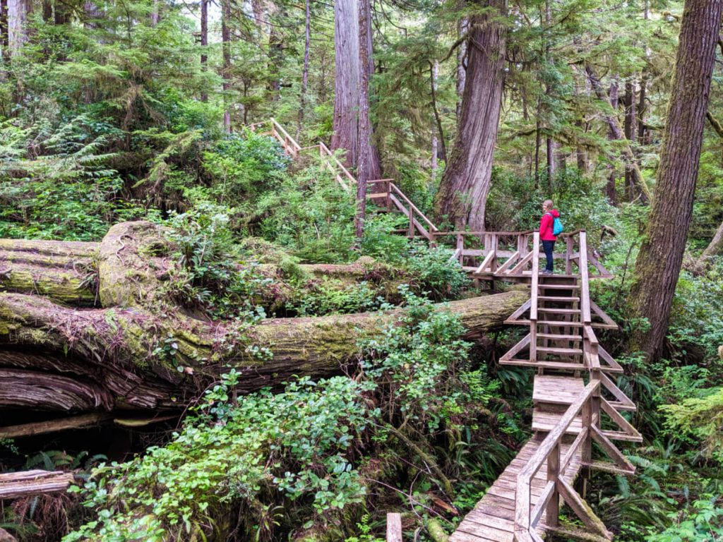 Gemma standing on elevated boardwalk looking over fallen old growth trees