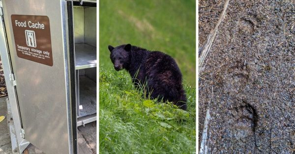 How to be Bear Safe on Vancouver Island