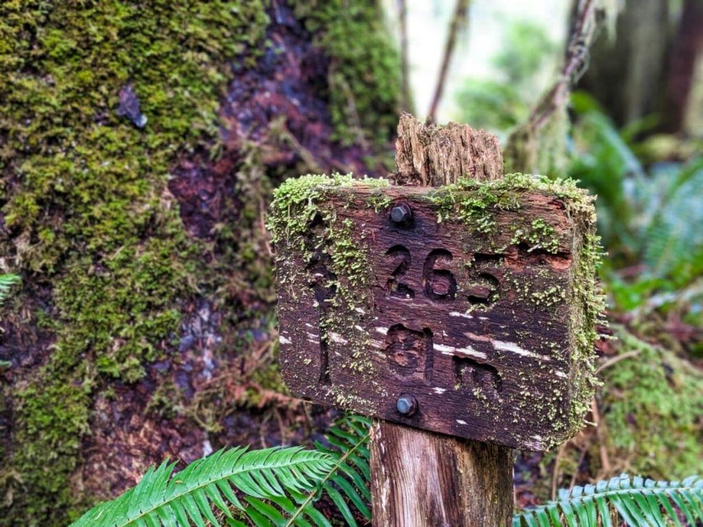 Close up of wooden tree height sign, covered in moss