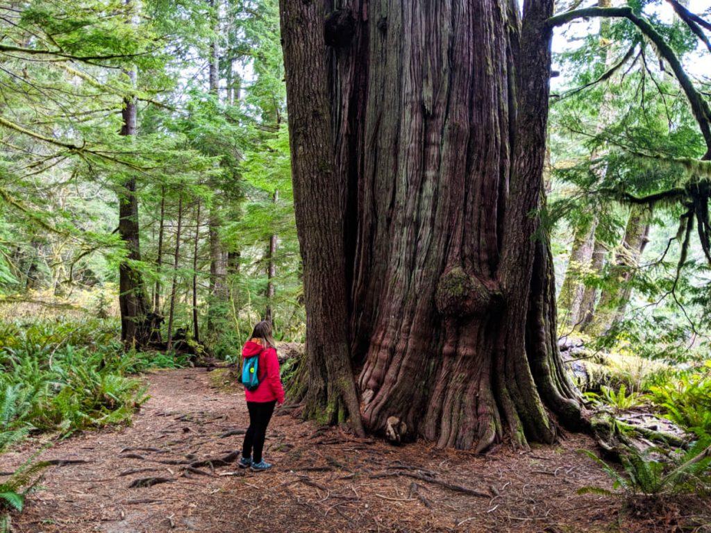 Gemma standing next to a huge cedar tree on the Giant Cedar Trail