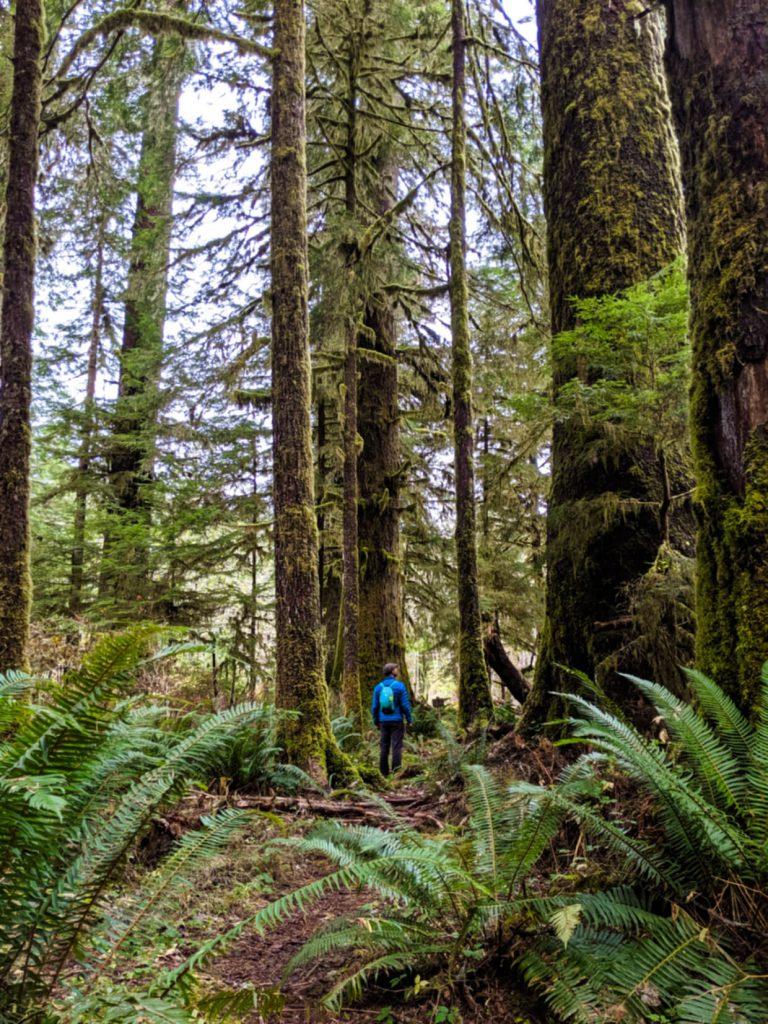 JR looking up at large trees in Carmanah Walbran Provincial Park